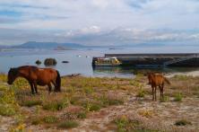 caballos de la Isla de Sálvora